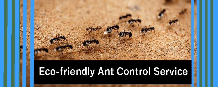Eco-friendly Ant Control Treatment