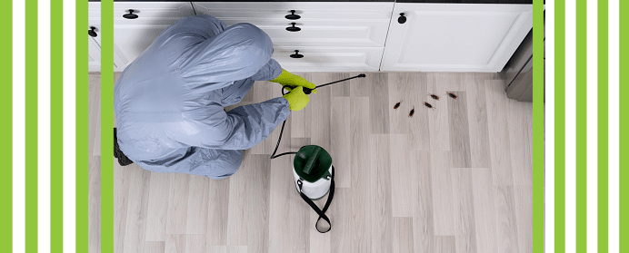 Professional Cockroach Treatment