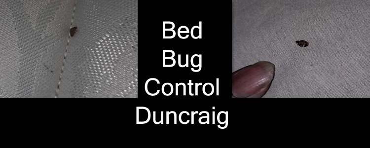 Bed Bug Control Duncraig